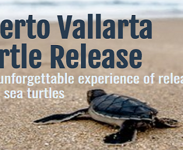turtle-release-2